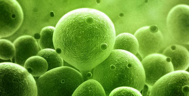 probiotica werking